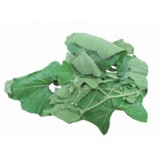Cucurbit Leaves - Bottle Gourd Leaves - Lau Shaak -लौकी पालक - লাউ শাক - 1 bundle